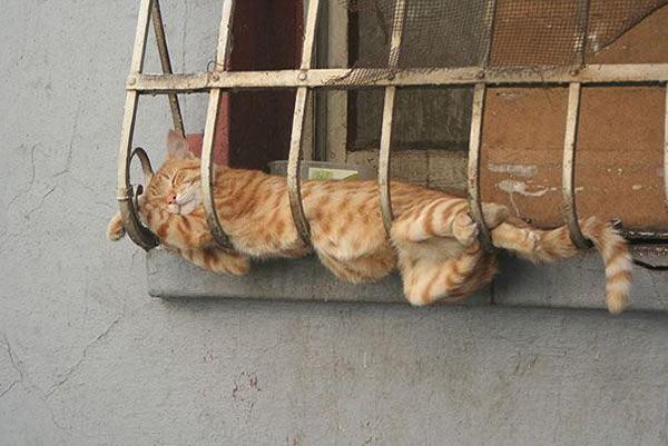 Спайдер кот