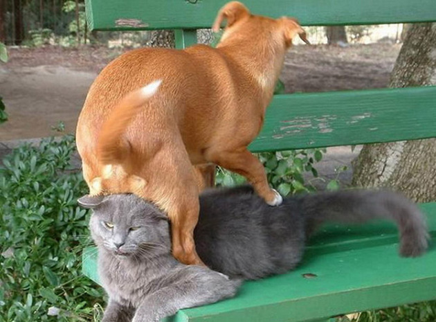 кот скамейка