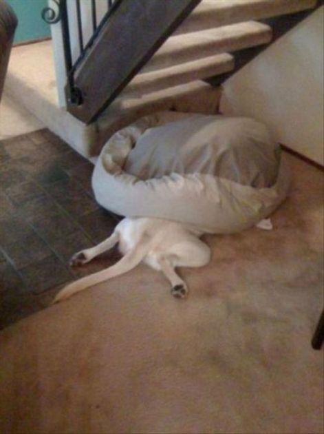 Смущённая собака