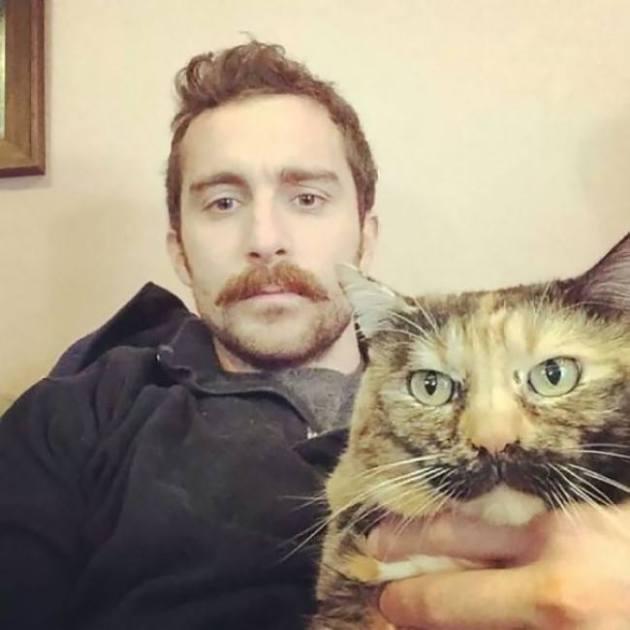 Усатый полосатый кот