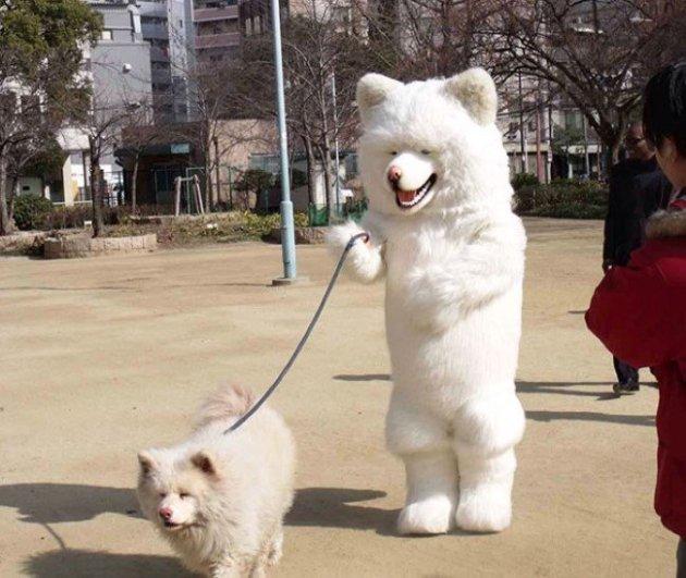 Собака собаки