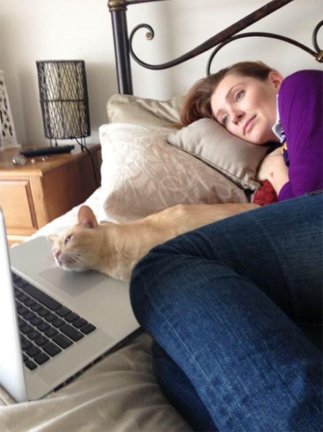Коты тоже любят бездельничать