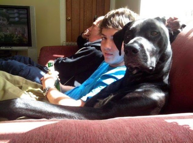 пёс на диване
