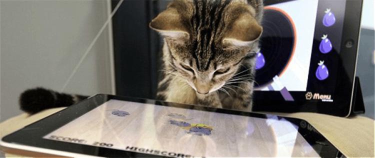 Приложение для кота