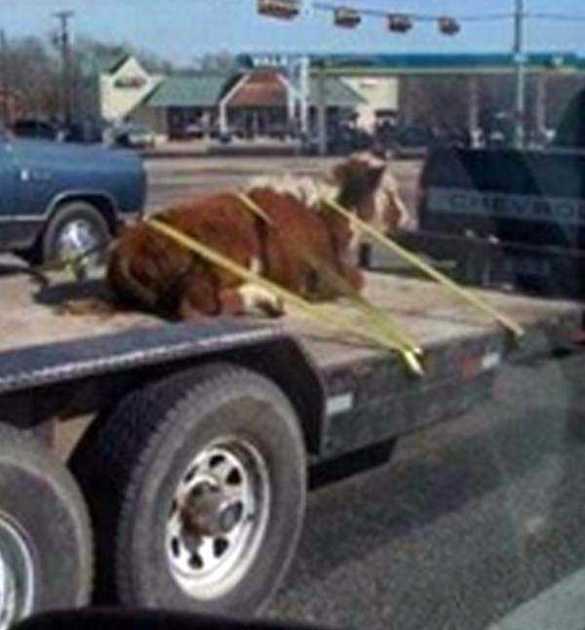 Безопасная перевозка