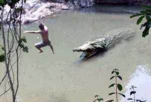 Привет, крокодил - прощай, жизнь