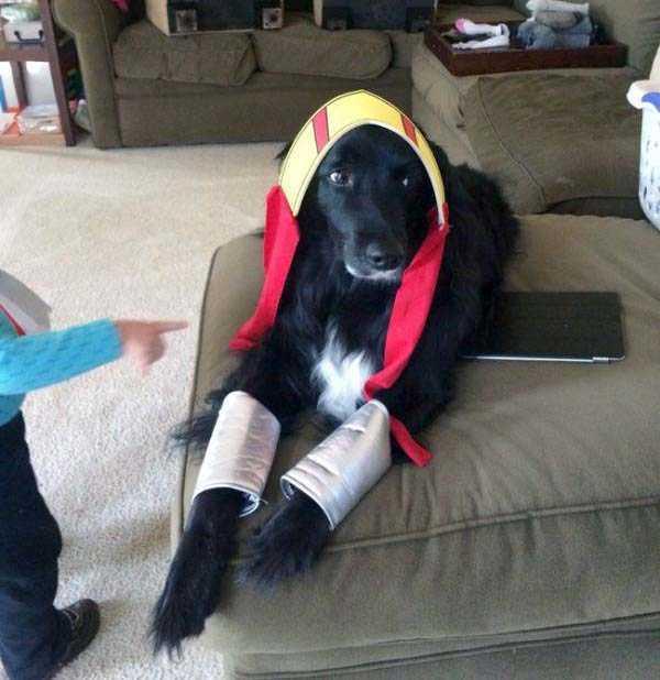 Пёс в непонятках
