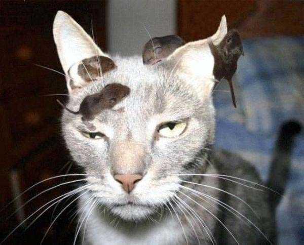 Дзен кот