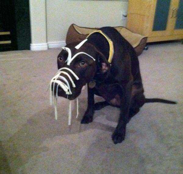 Бедный пёсик
